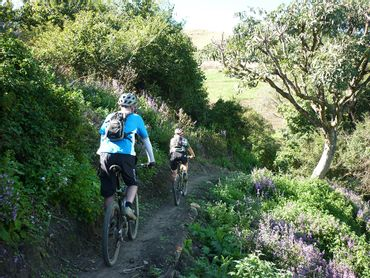 Flowing singletrack through forested valleys