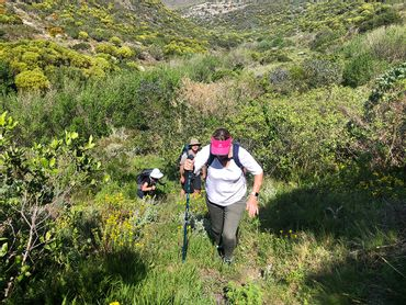The final day of the Fynbos tail entails walking up the Baviaans Fontein valley through pockets of indigenous forests and dense fynbos-clad hills over onto Grootbos Nature Reserve.